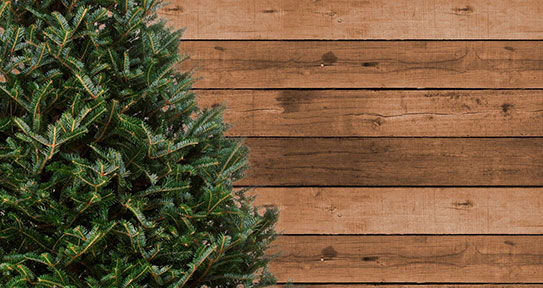 Blue Ridge Mountains Fraser Fir